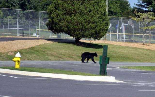 3 Bear Sightings pic2