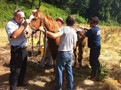9OIZ Horse Rescue 2