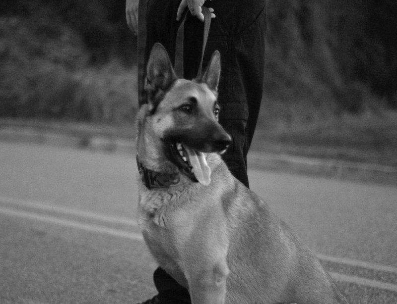 I-K9 Officer pic 1.jpg