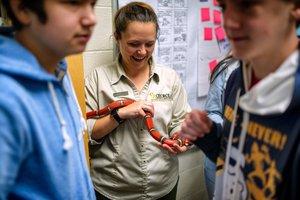 snake season